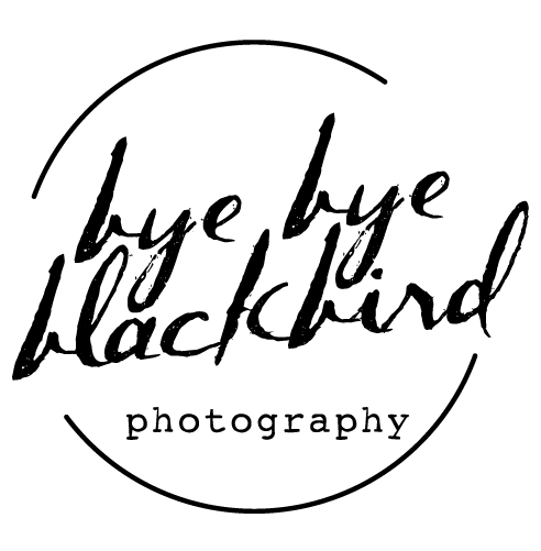 Bye Bye Blackbird Photography